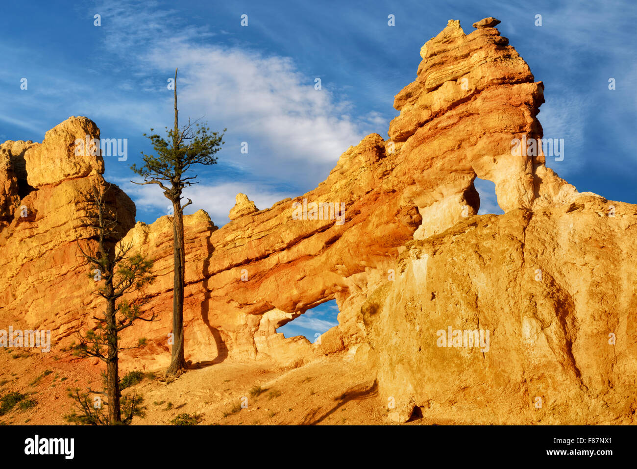 Rock Arches with trees. Bryce National Park, Utah - Stock Image