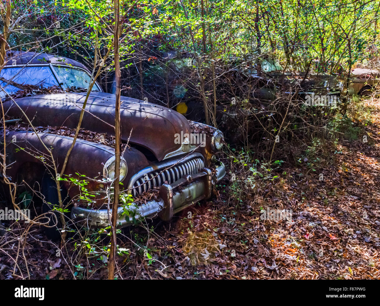 Old, junk cars in the woods Stock Photo: 91140716 - Alamy