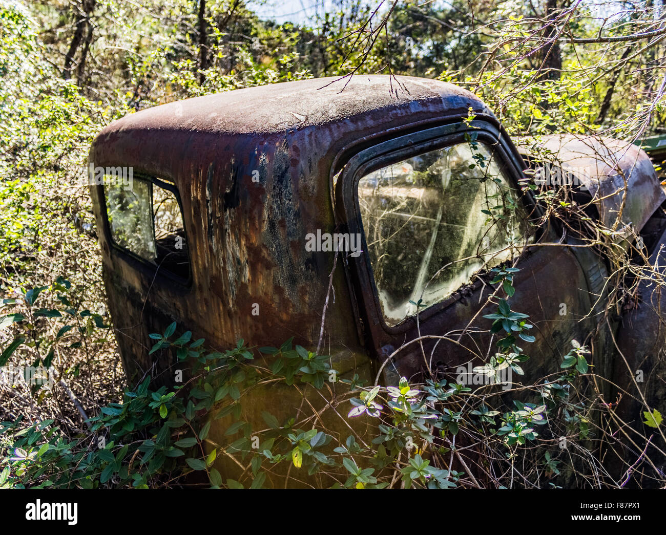Old, junk cars in the woods Stock Photo: 91140729 - Alamy
