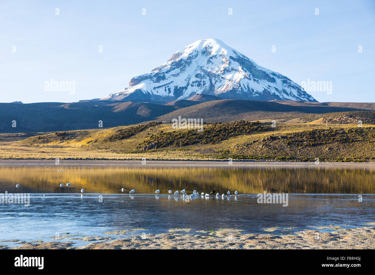 Sajama volcano and lake Huañacota, in the Natural Park of Sajama. Bolivia - Stock Image