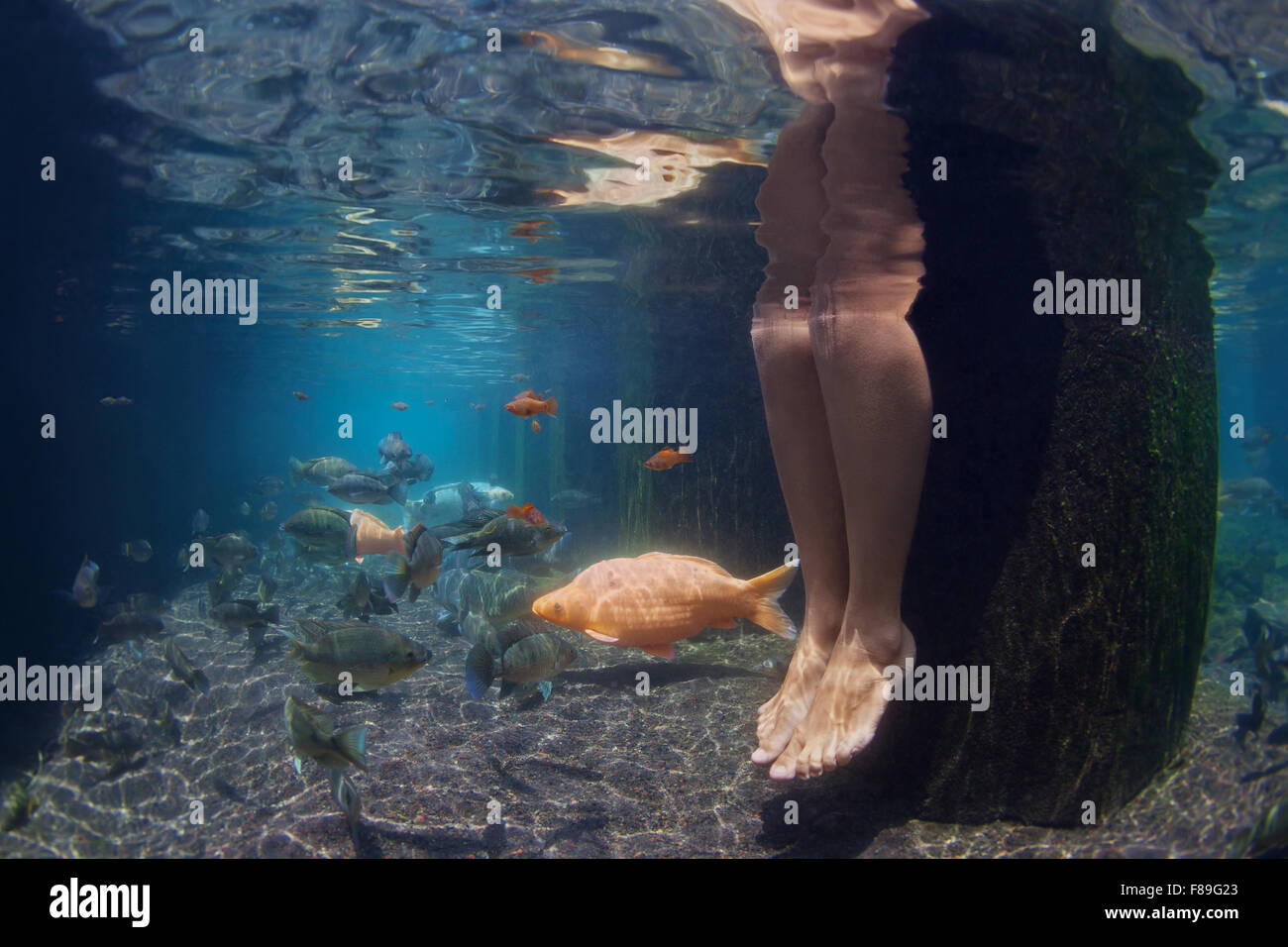 Underwater picture of legs of young woman relaxing in spa pool with gold koi fishes swimming in fresh blue water. Stock Photo
