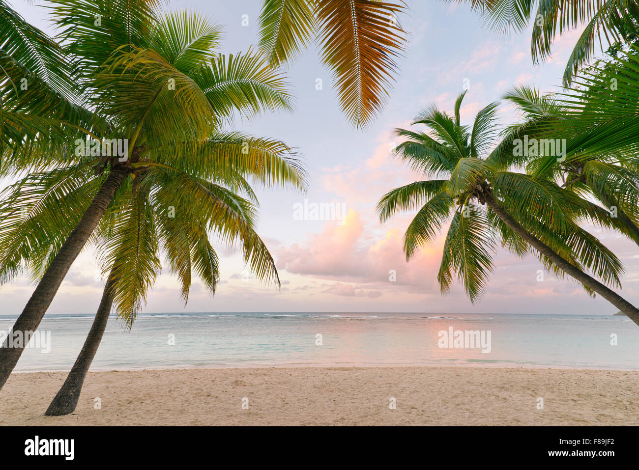 Palm trees and beach, Guadeloupe - Stock Image