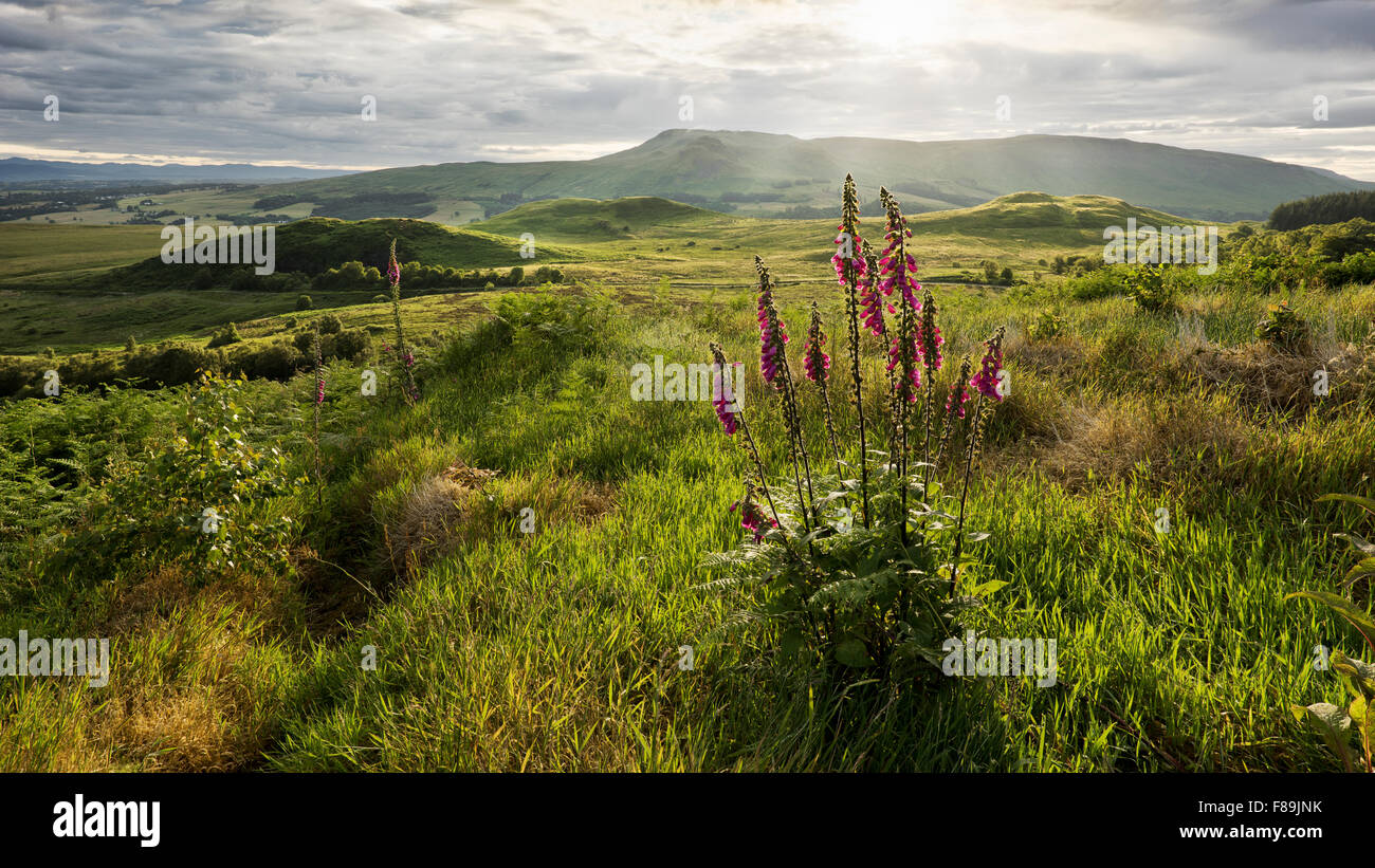 Campsie Fells Mountain Range, Scotland, Europe - Stock Image