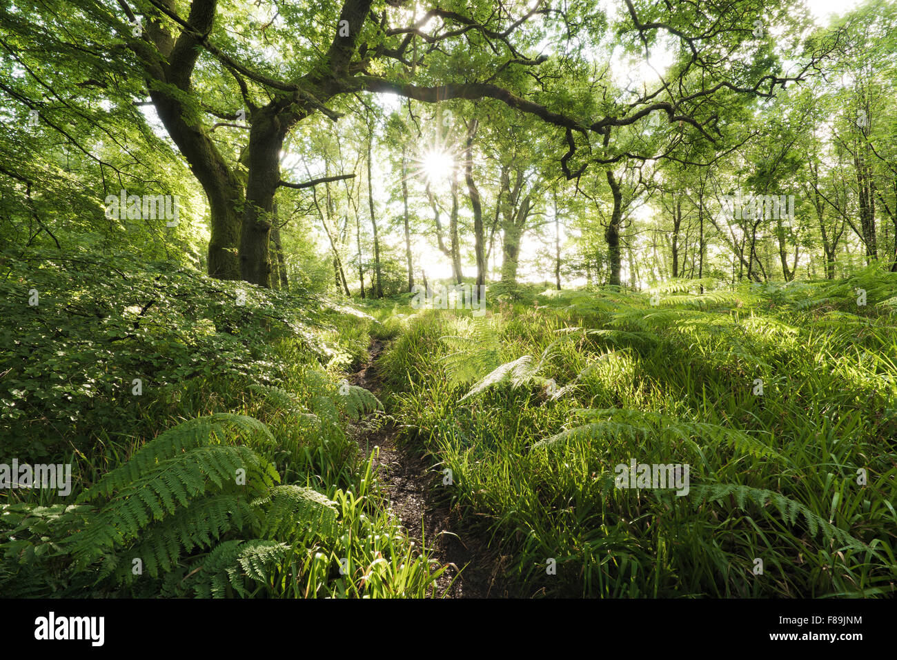 Mystical Forest, Scotland, Europe - Stock Image