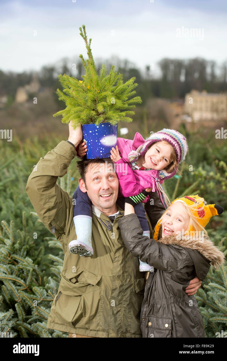 Christmas Xmas tree trees family buying collecting - Stock Image