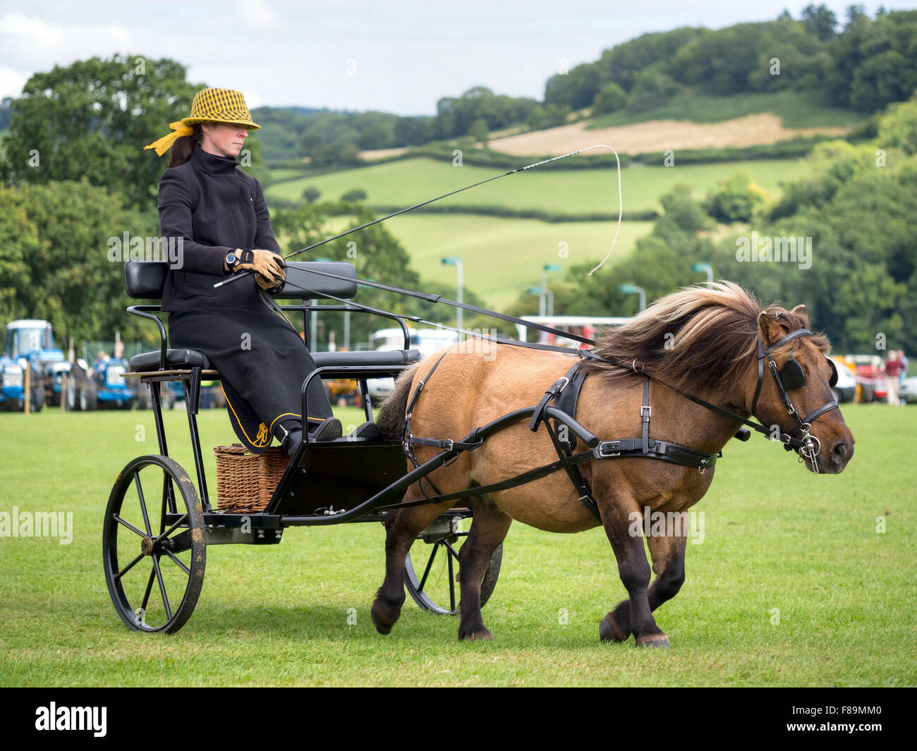 Woman with pony and trap at agricultural show - Stock Image