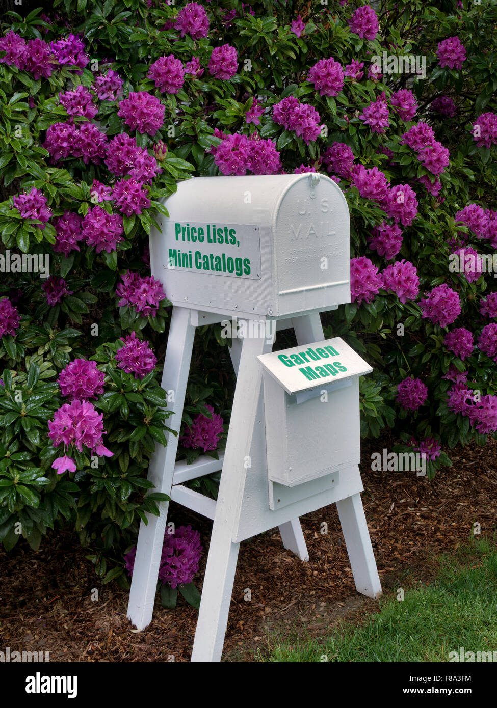 Mailbox and rhododendrons blooming. Schrieners Iris Gardens. Oregon - Stock Image