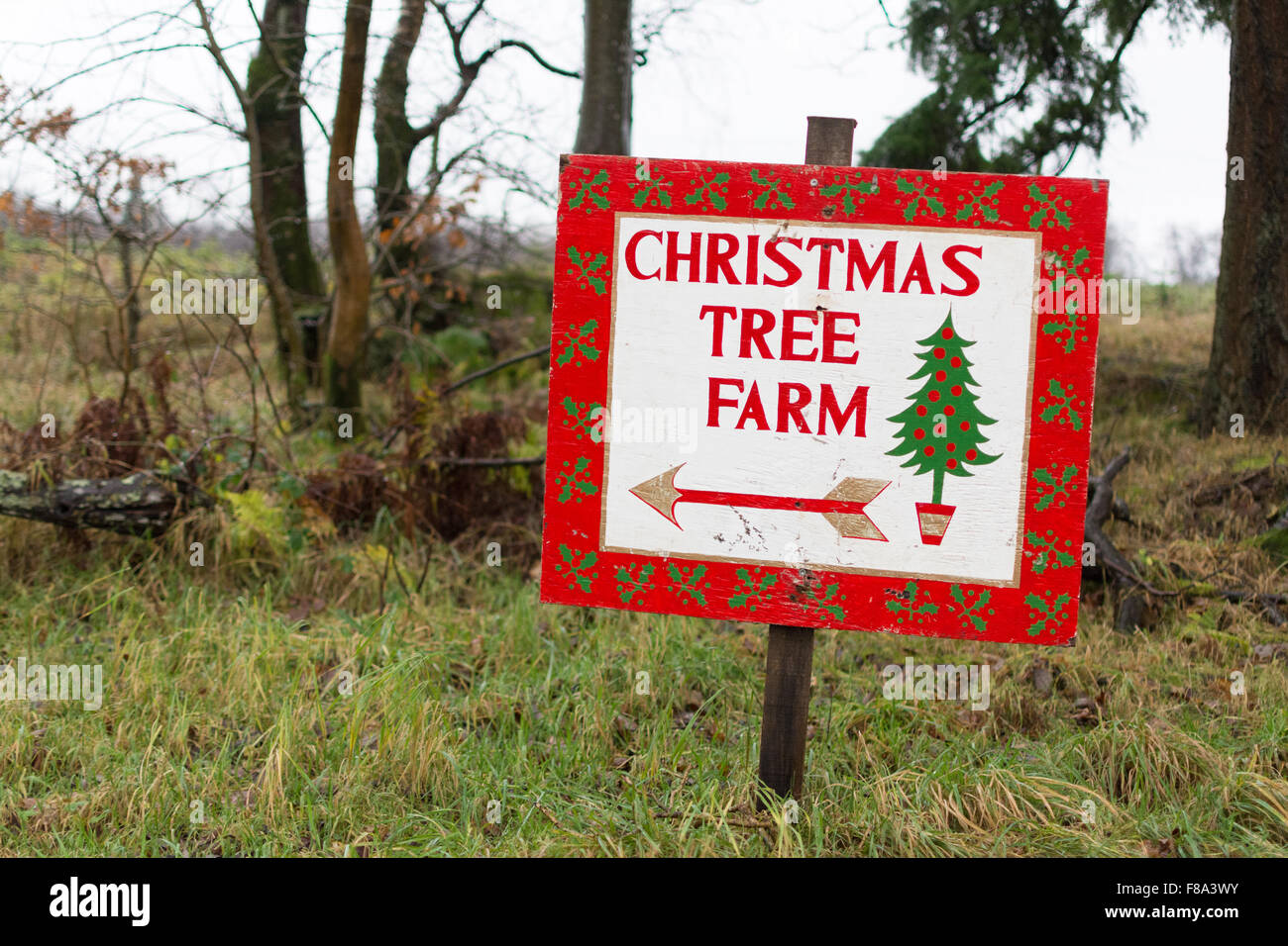 Christmas Tree Farm sign pointing the way to Wester Auchentroig Christmas Tree Farm, Buchlyvie, Stirlingshire, Scotland, - Stock Image