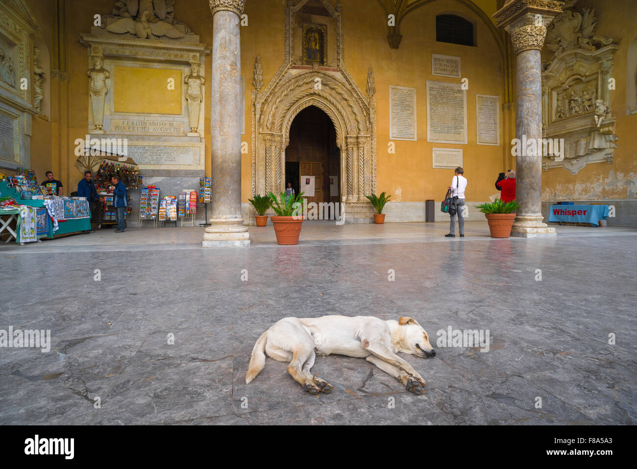 Dog sleeping, view of a dog asleep on a summer day near the entrance to the cathedral in Palermo, Sicily. - Stock Image