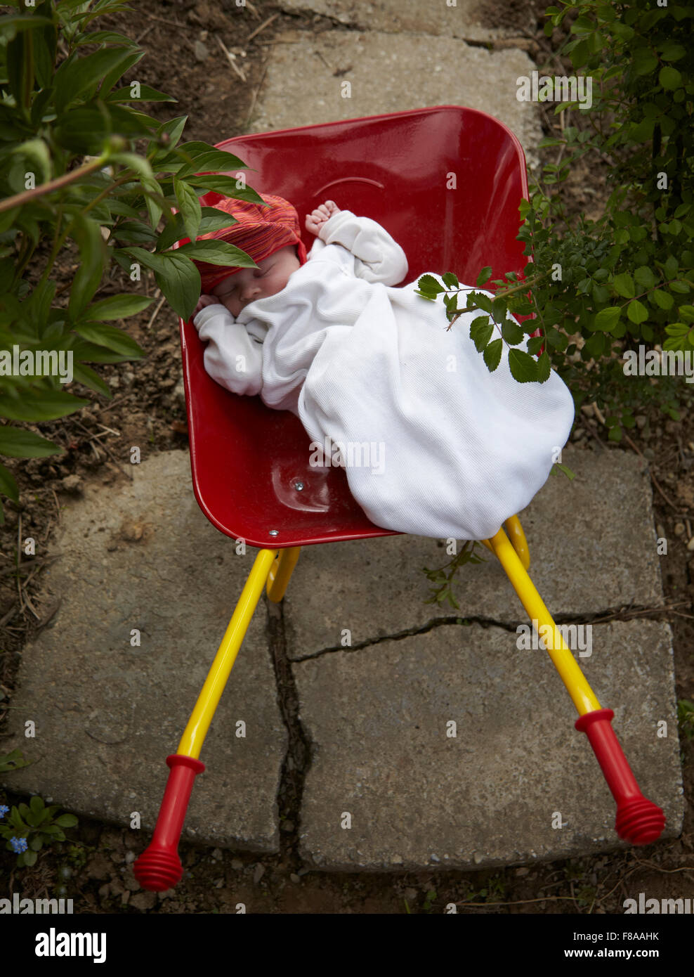 baby girl (1 month) wearing a white sleepingbag lying in a toy wheelbarrow in the garden. - Stock Image