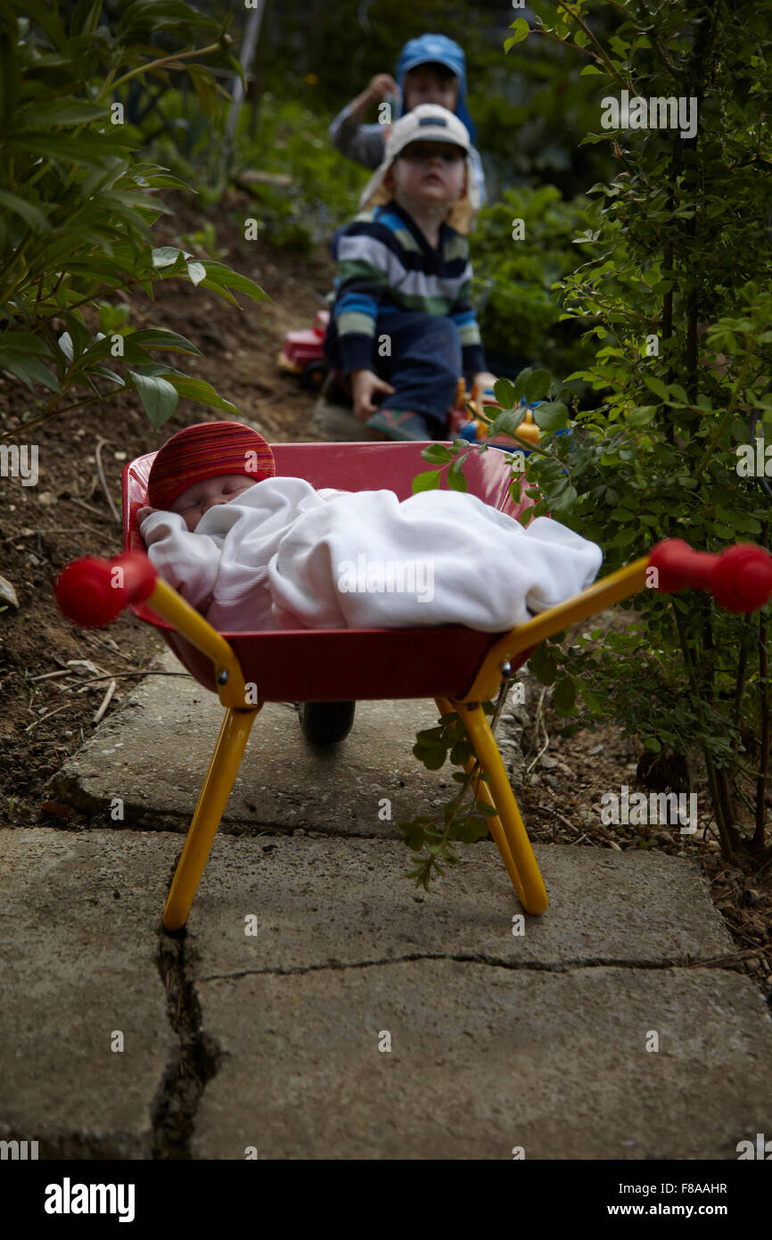 baby girl (1 month) wearing a white sleepingbag lying in a toy wheelbarrow in the garden. Two brothers in the background. - Stock Image