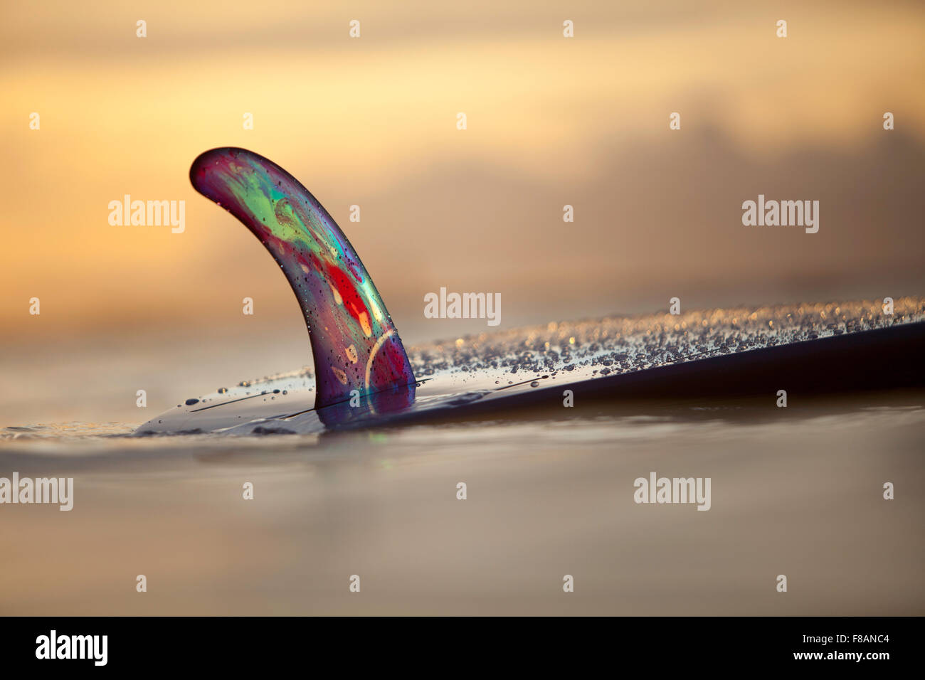 Catalog shot of RFC multi-colored10' surfboard fin at sunset.  Water drops on fin and bottom of longboard.  - Stock Image