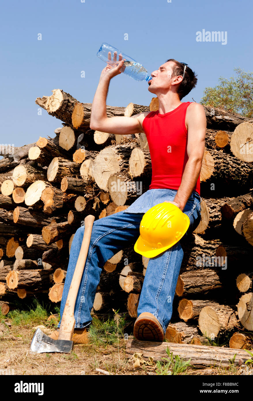 woodcutter cuts the tree in the forest - Stock Image