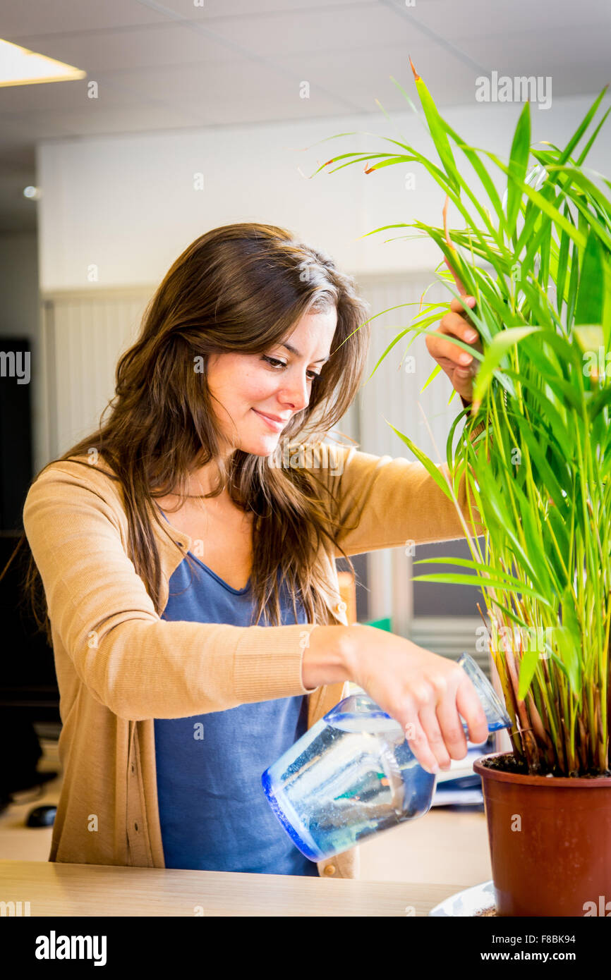 Woman watering a plant in the office. - Stock Image