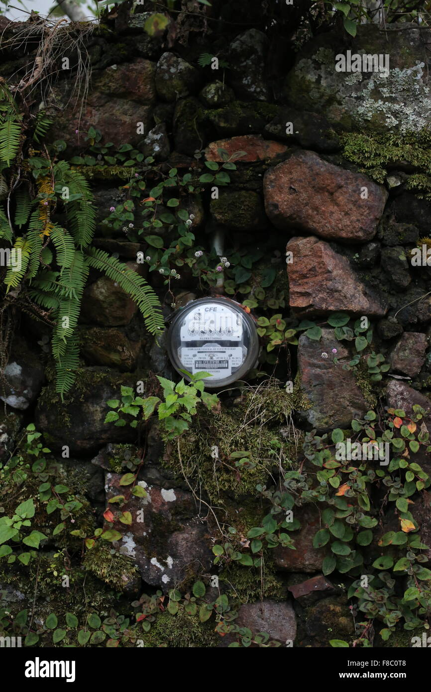 An electric meter in an old stone wall covered in ferns and foliage. - Stock Image