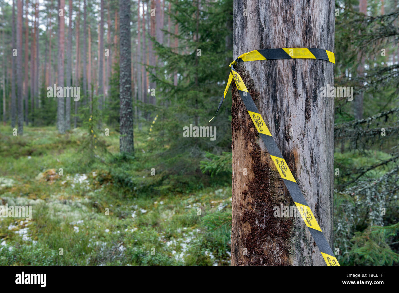 Marking for nature preservation - Stock Image