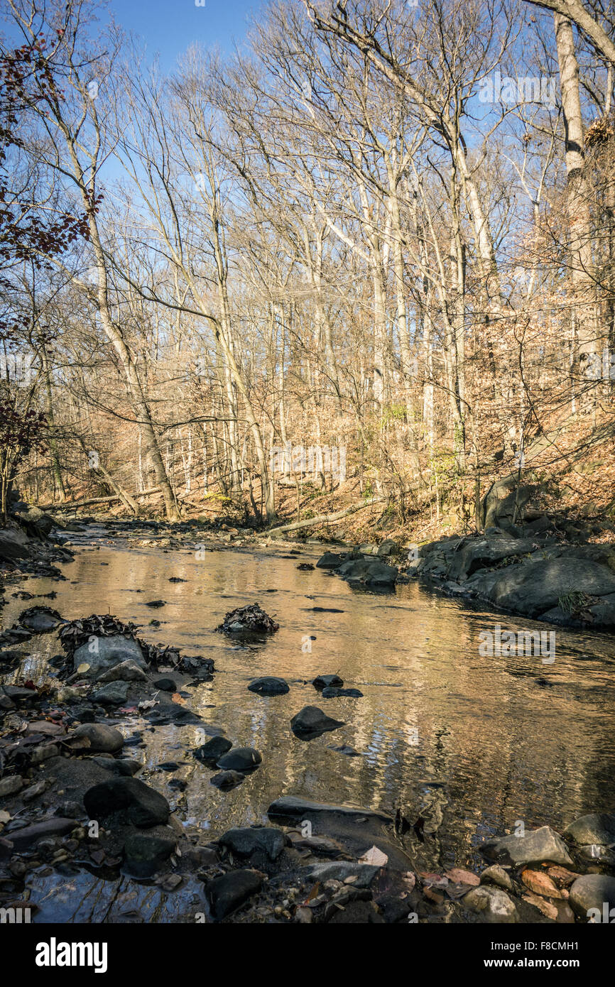 Sligo Creek in Maryland. - Stock Image
