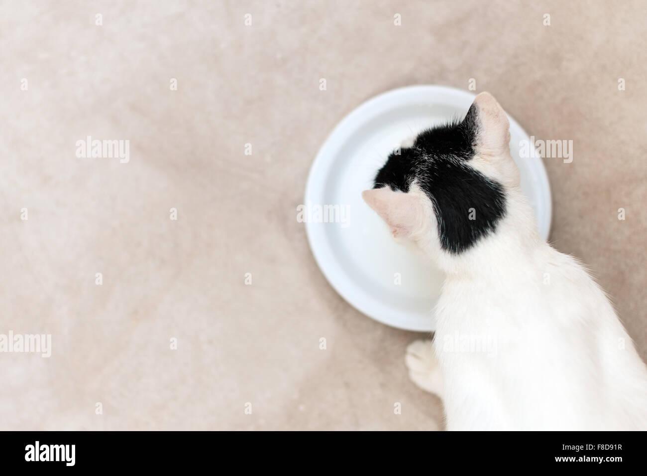 eosinophilic granuloma cat natural treatment