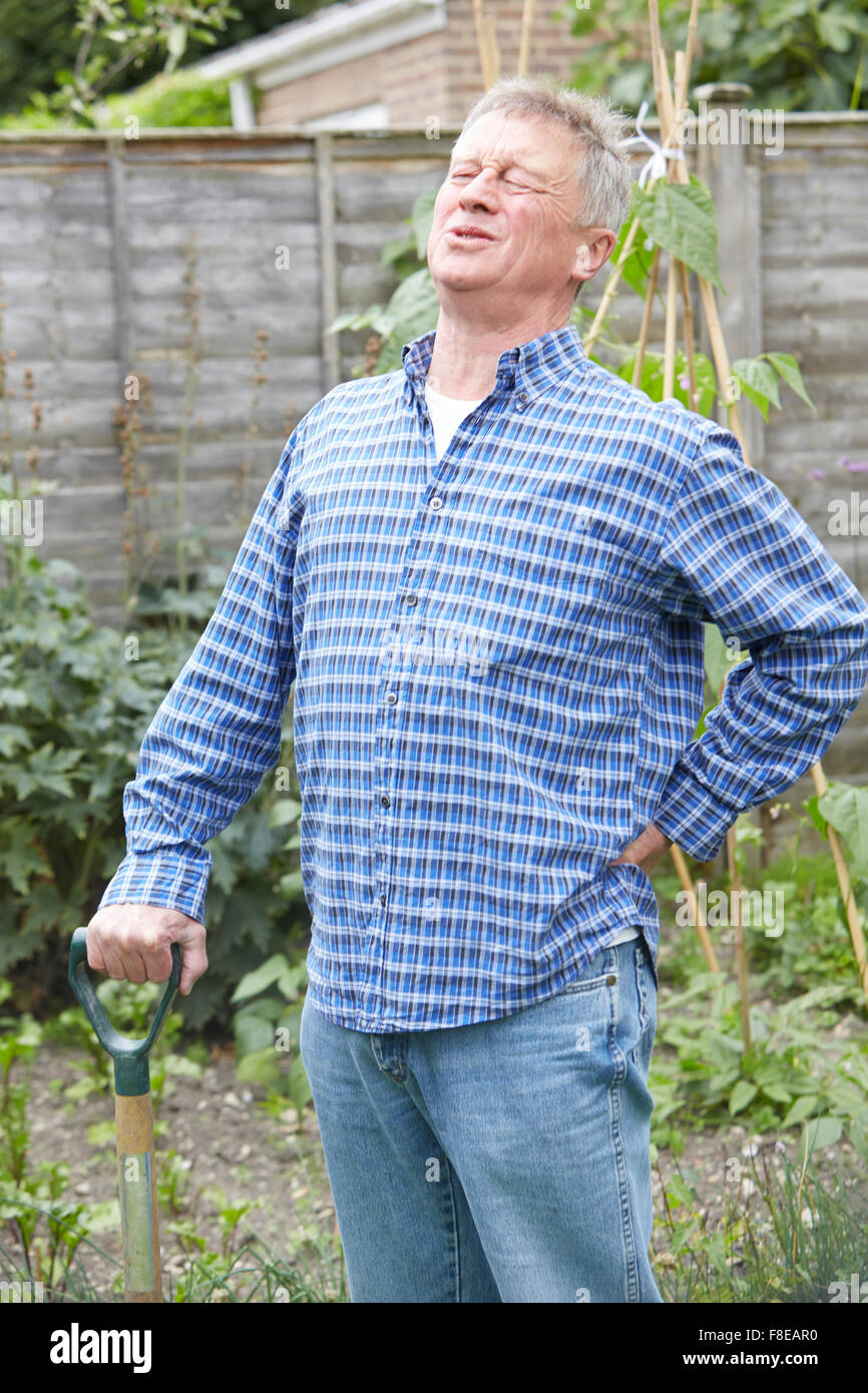 Senior Man Suffering From Back Pain Whilst Gardening - Stock Image