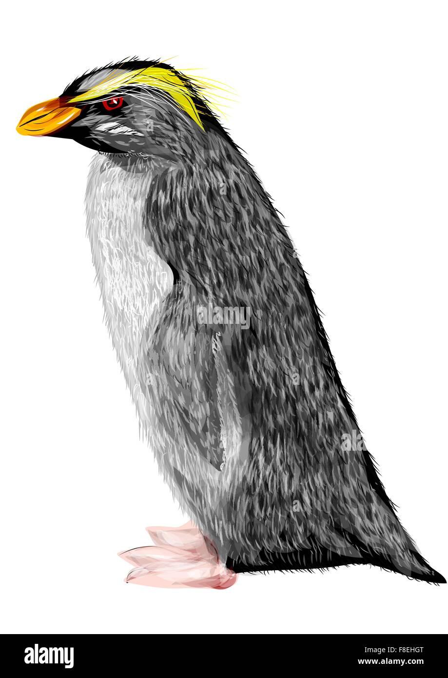 Fiordland crested penguin - Stock Vector