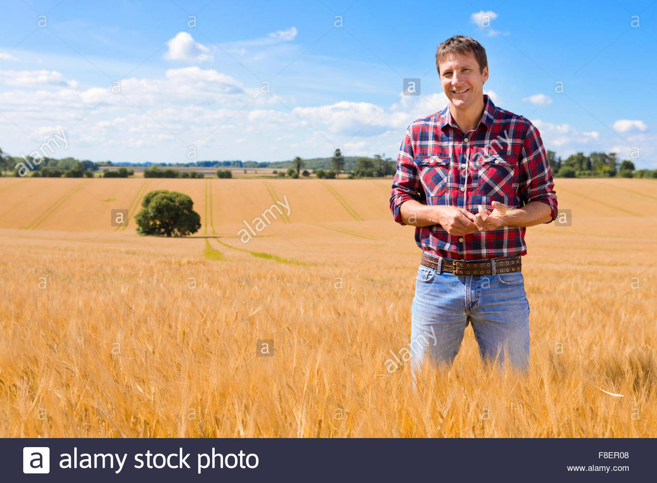 Portrait confident farmer in sunny rural barley crop field in summer - Stock Image