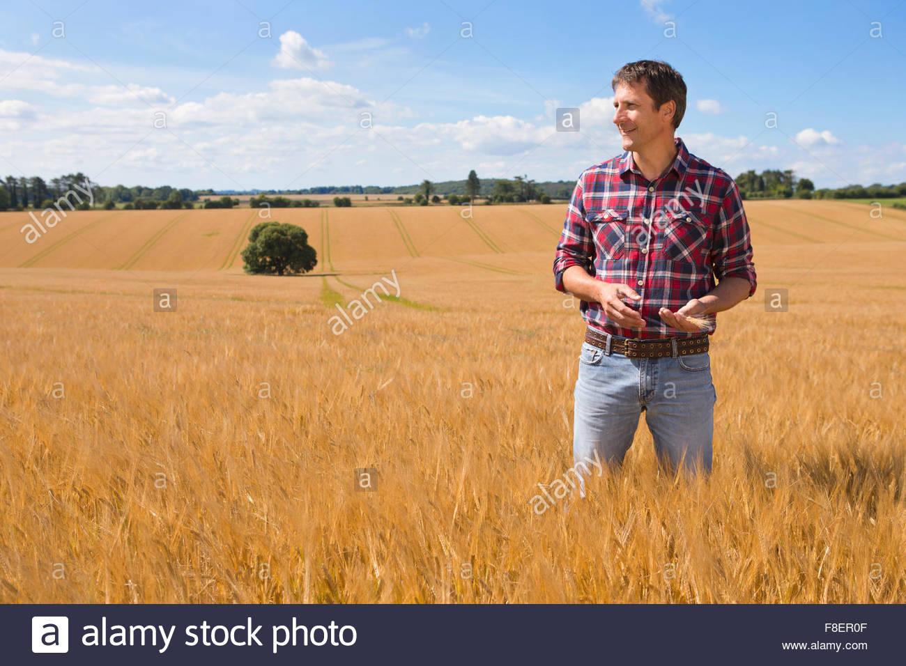 Farmer looking away in sunny rural barley crop field in summer - Stock Image