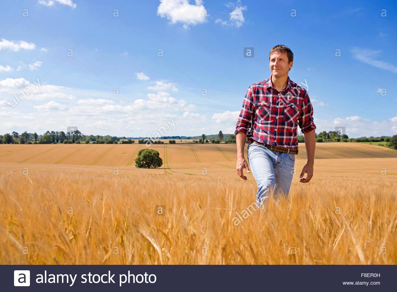Farmer walking in sunny rural barley crop field in summer Stock Photo