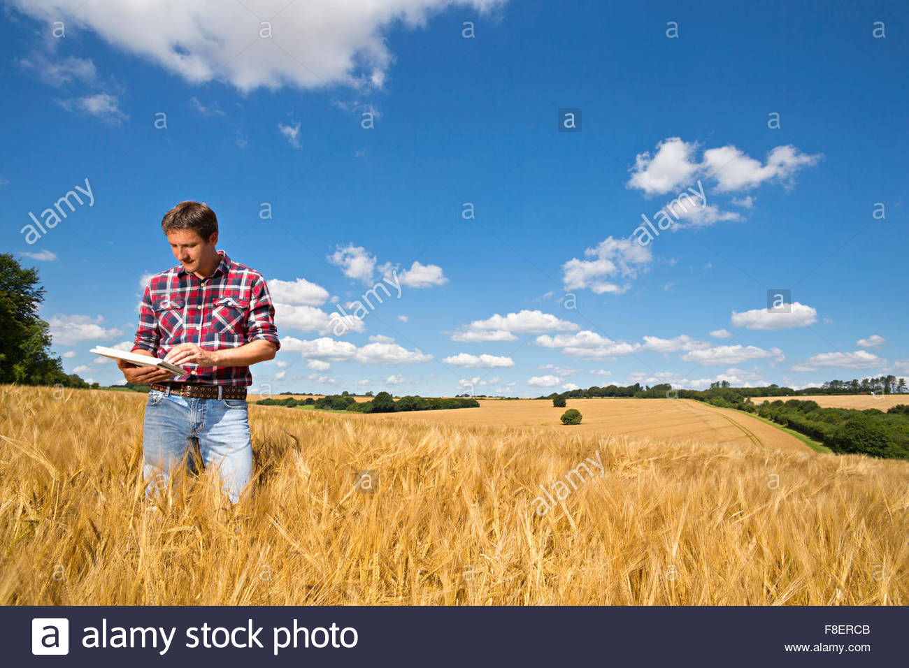 Farmer using digital tablet in sunny rural barley crop field in summer - Stock Image