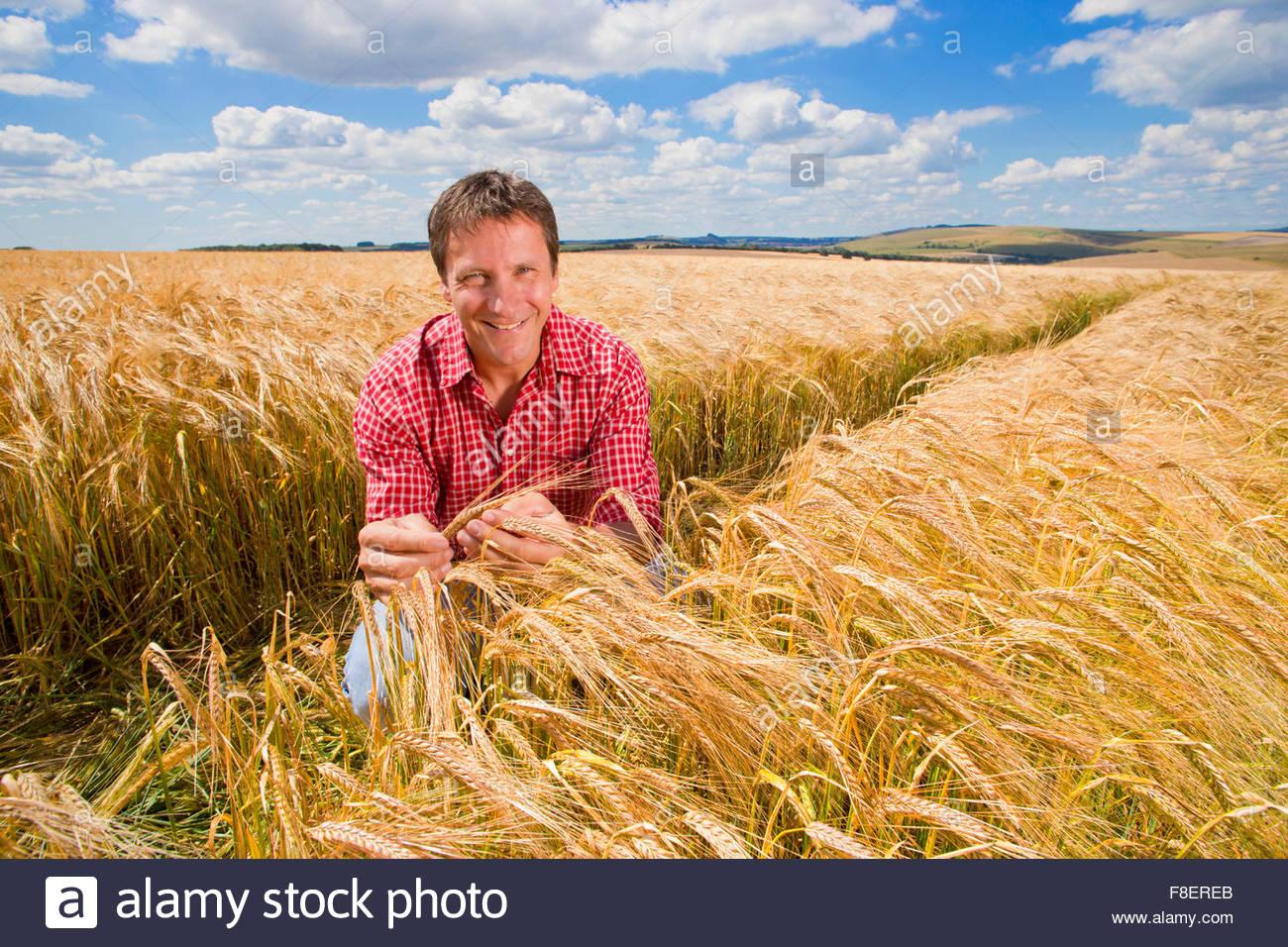 Portrait confident farmer examining sunny rural barley crop field in summer - Stock Image