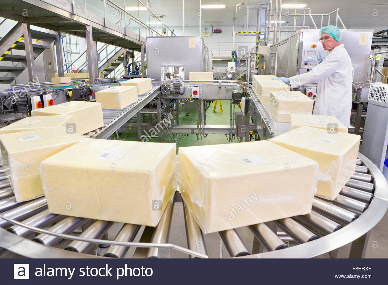 Worker handling large blocks of cheese at production line in processing plant - Stock Image