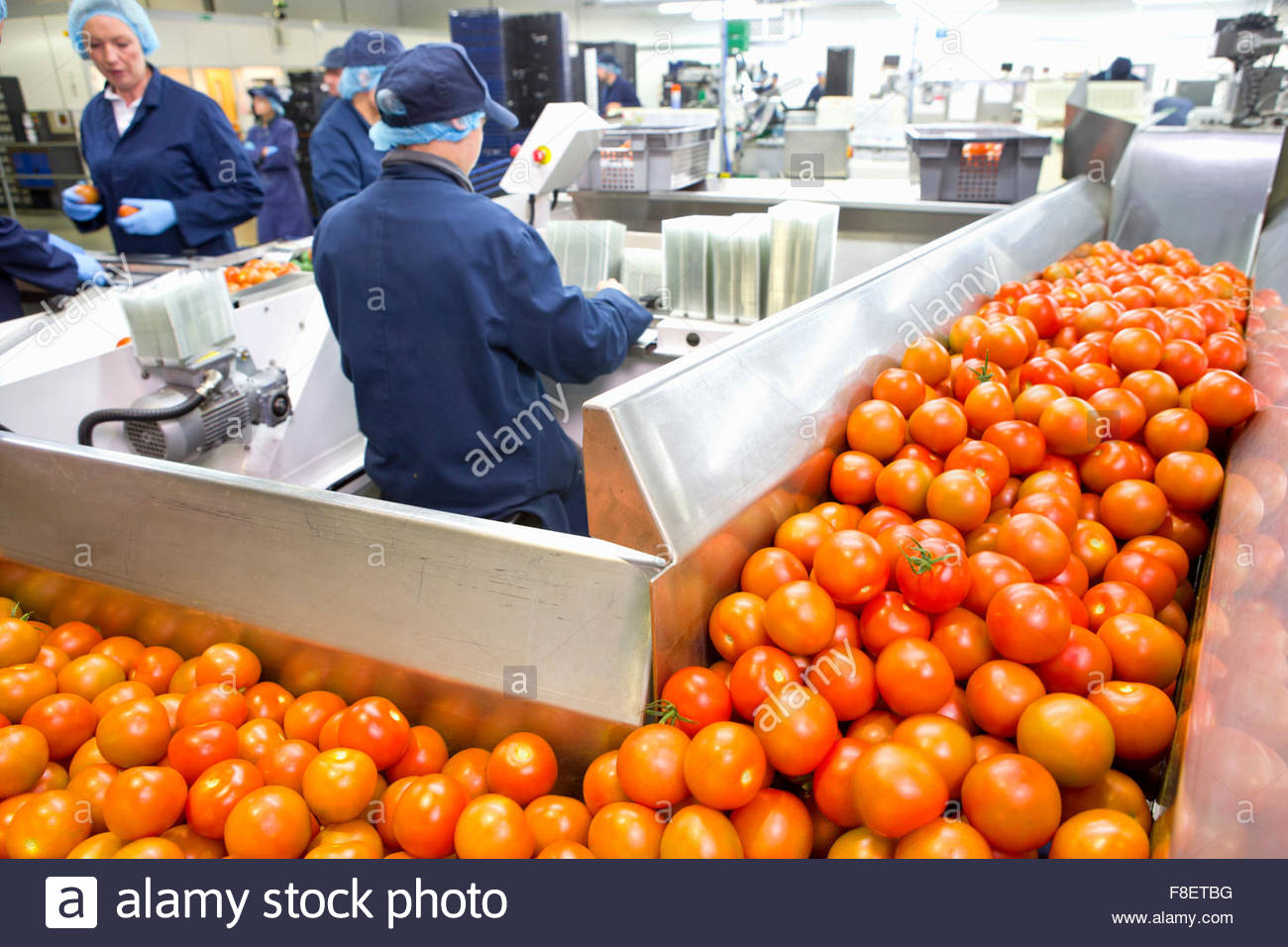 Ripe red tomatoes on production line in food processing plant - Stock Image