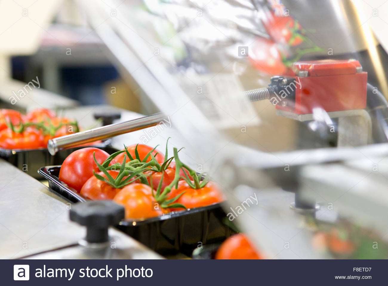 Packages of ripe red vine tomatoes on production line in food processing plant Stock Photo