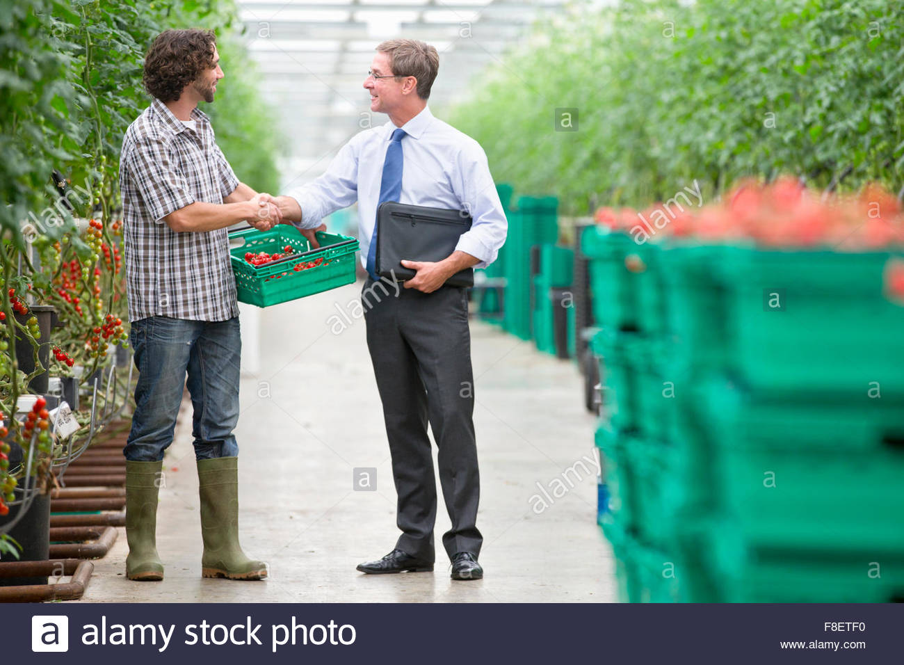 Businessman and grower with crate of tomatoes handshaking in greenhouse - Stock Image