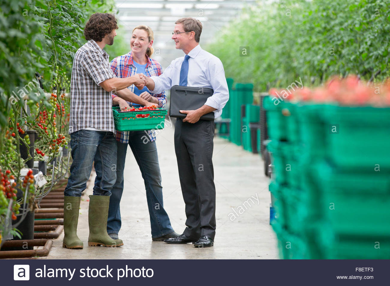 Businessman and growers with crate of tomatoes handshaking in greenhouse - Stock Image