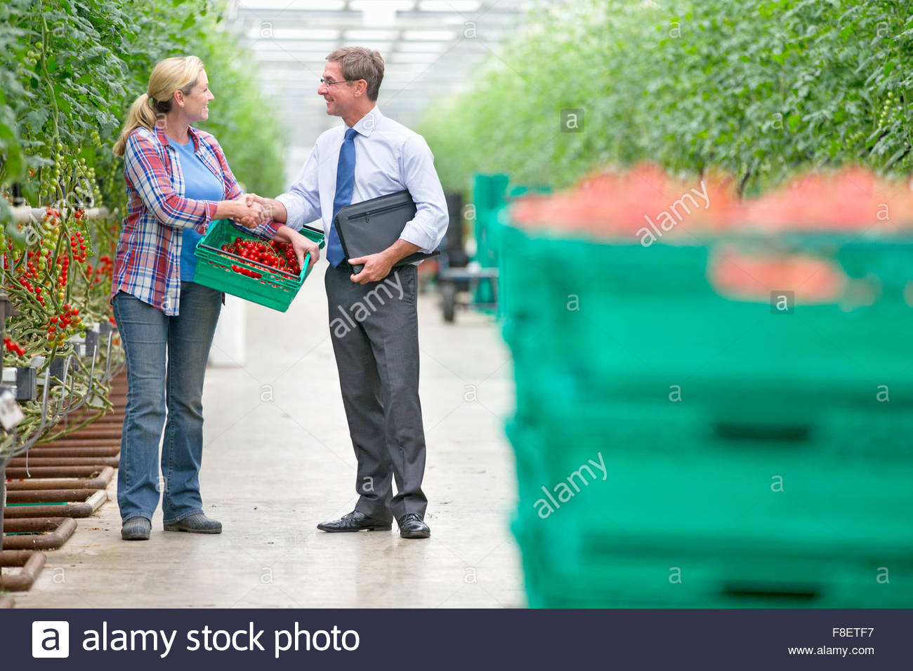 Businessman and grower with crate of ripe tomatoes handshaking in greenhouse - Stock Image