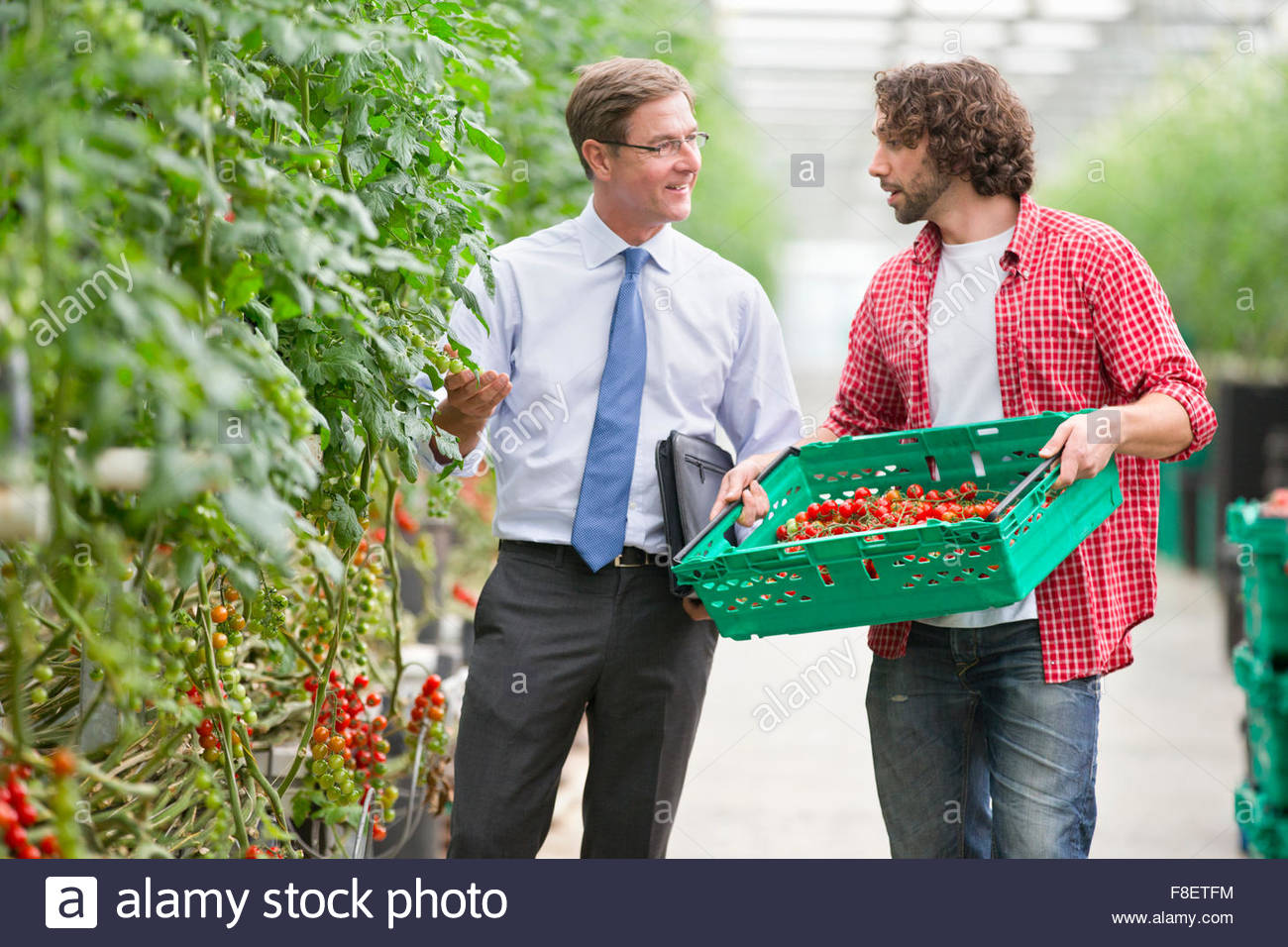 Businessman and grower discussing ripe vine tomatoes in greenhouse - Stock Image