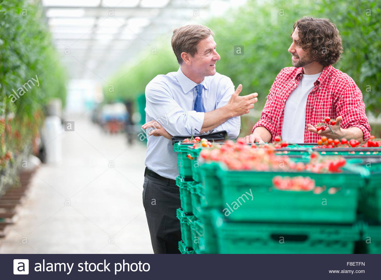 Businessman and grower discussing ripe tomatoes in crates in greenhouse - Stock Image