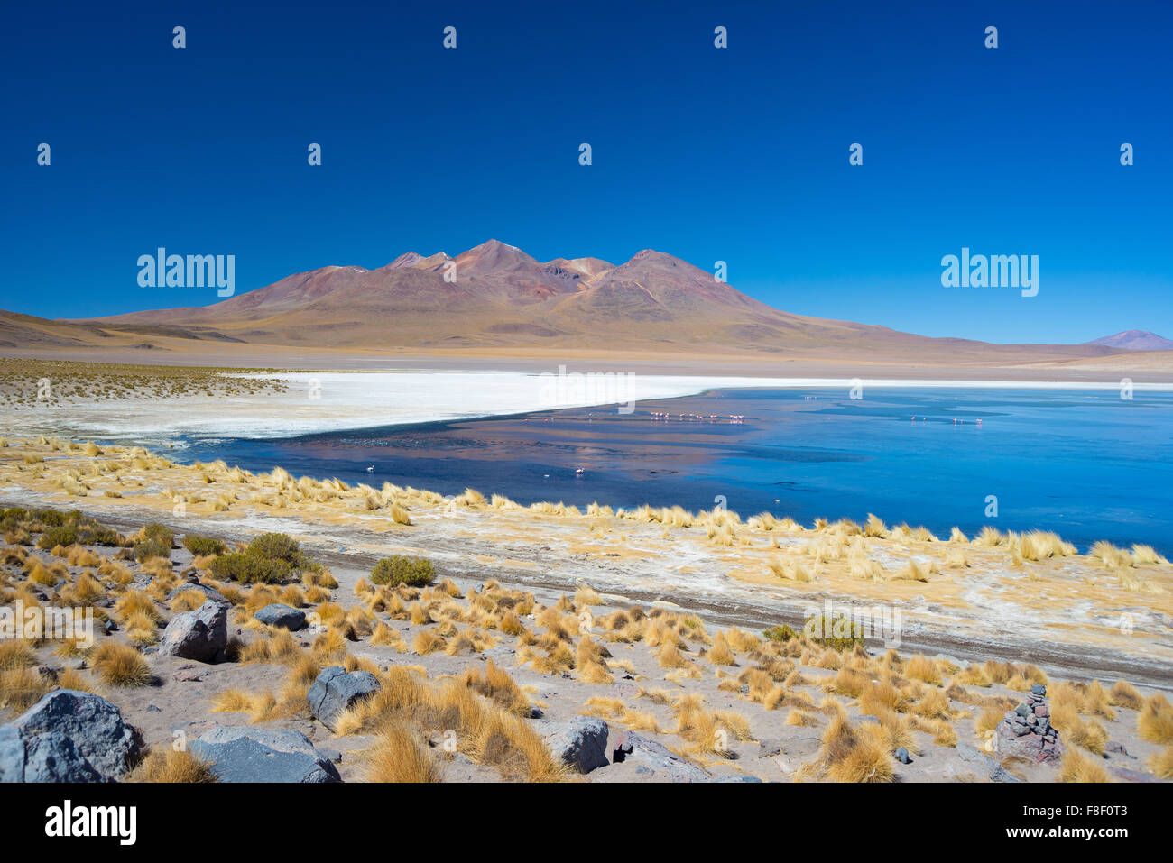 Wide angle view of 'Laguna Honda', a frozen salt lake with flamingos on the way to the famous Uyuni Salt - Stock Image