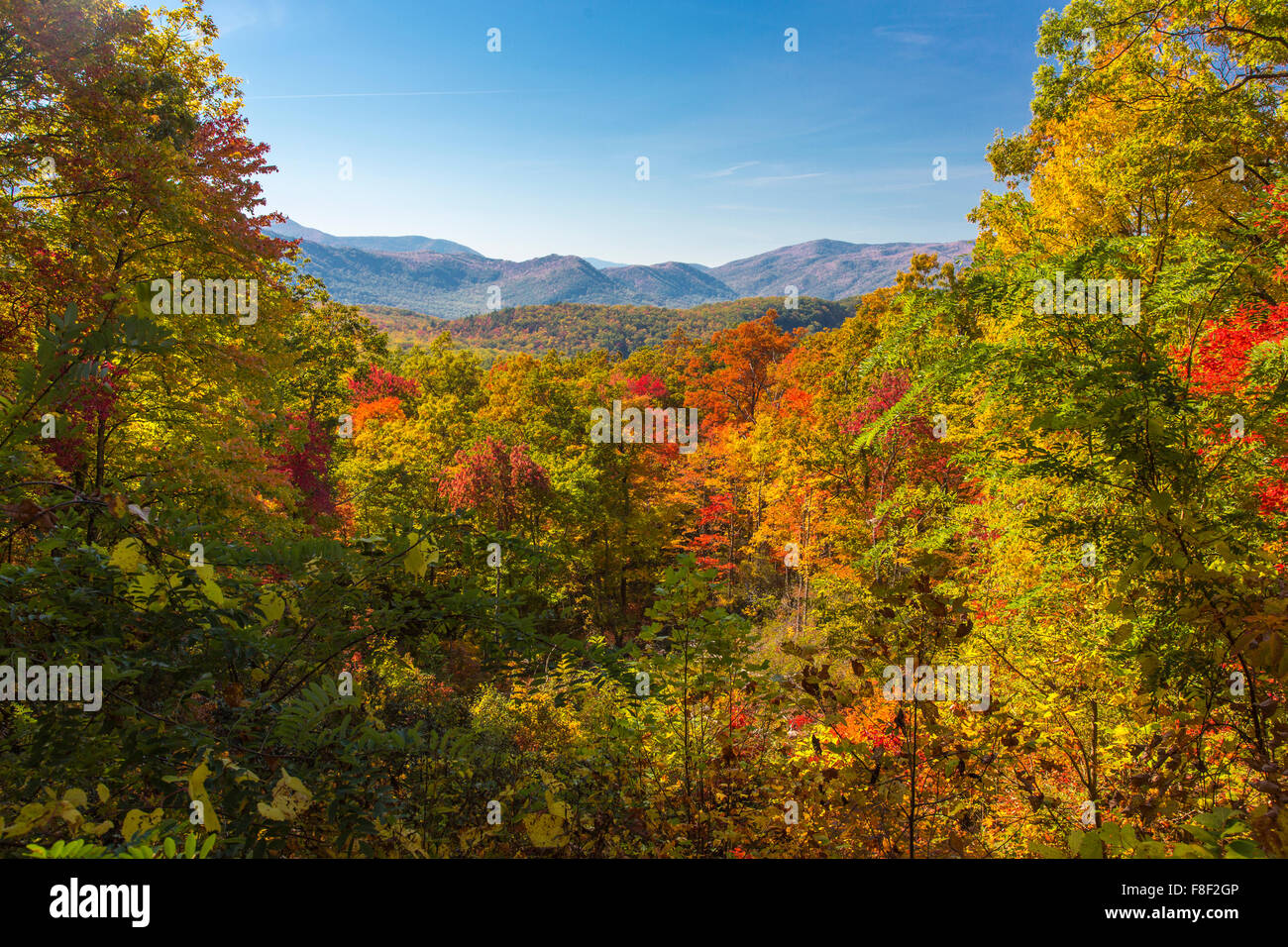 fall color on the roaring fork motor nature trail in great smoky stock photo 91300406 alamy. Black Bedroom Furniture Sets. Home Design Ideas