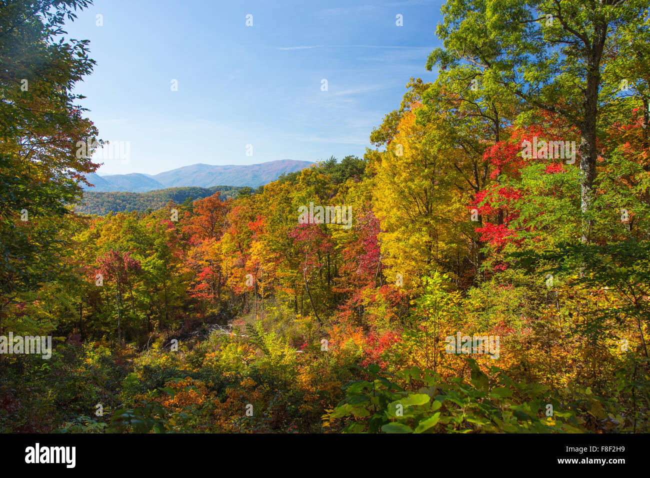 Fall color on the Roaring Fork Motor Nature Trail in Great Smoky Mountains National Park in Tennessee - Stock Image