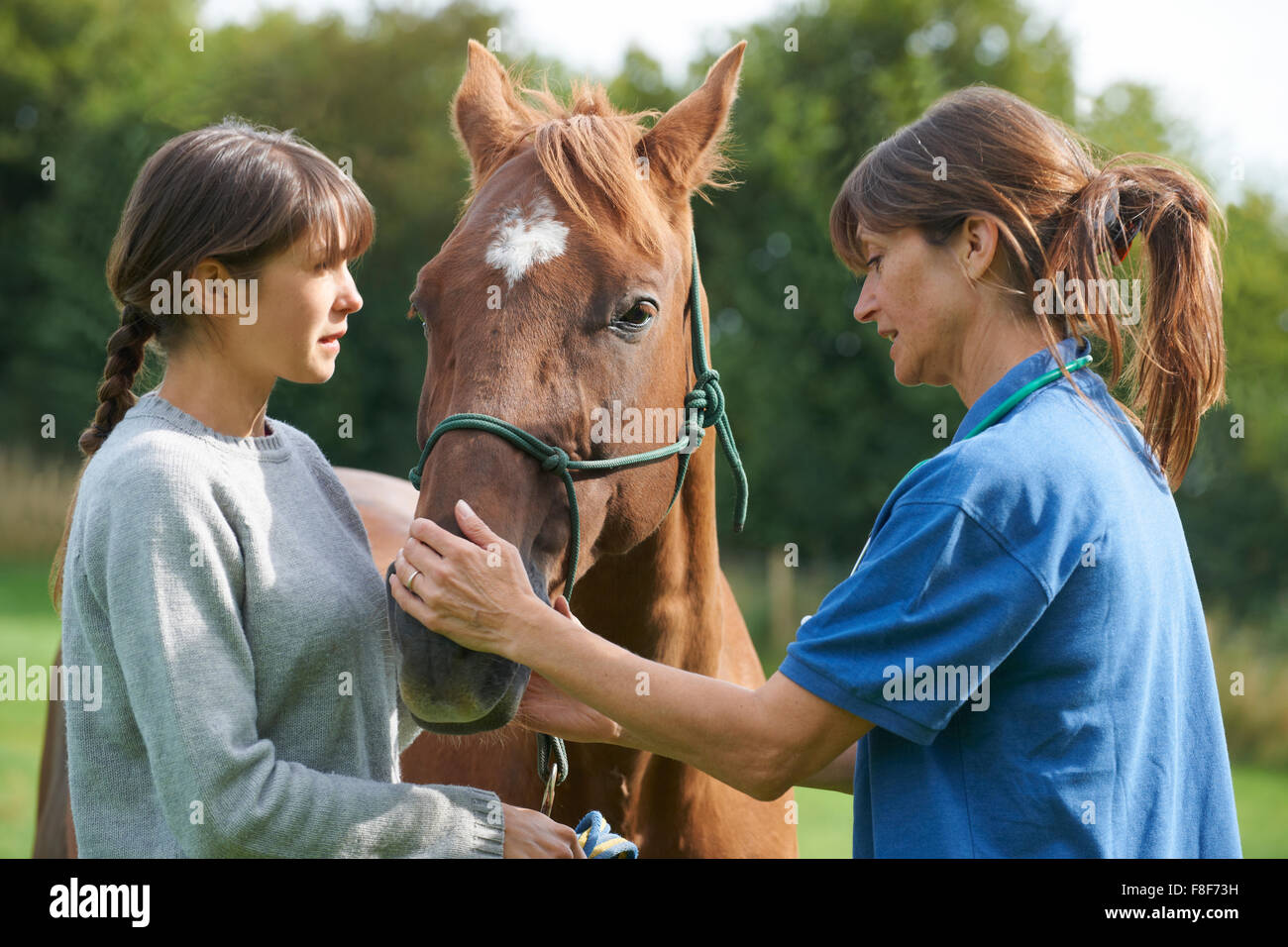 Female Vet Examining Horse In Field With Owner - Stock Image