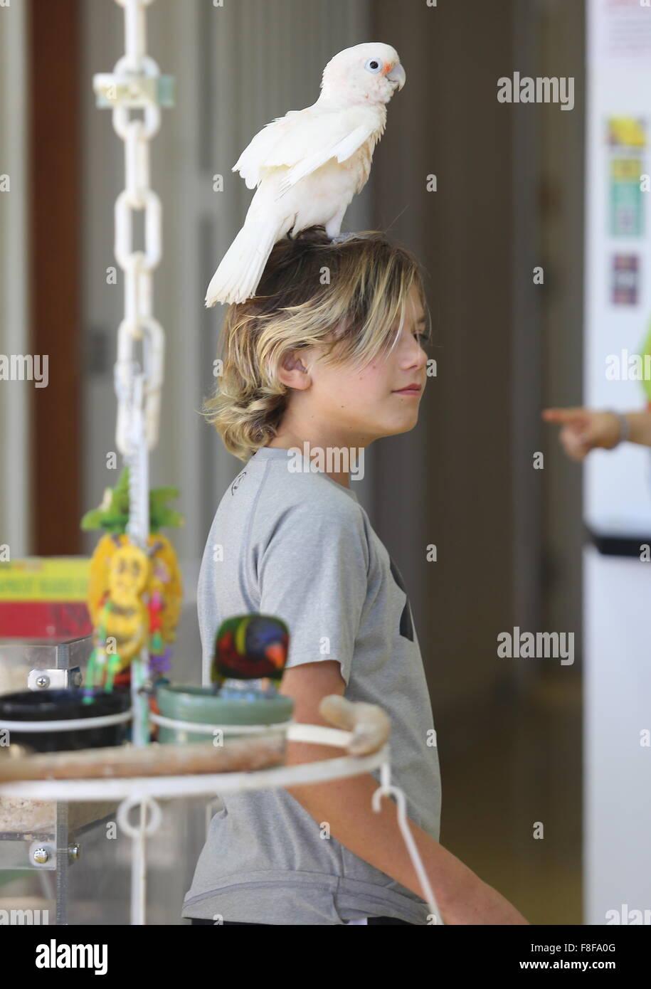 Gwen Stefani visits Omar's Exotic Birds in Santa Monica with