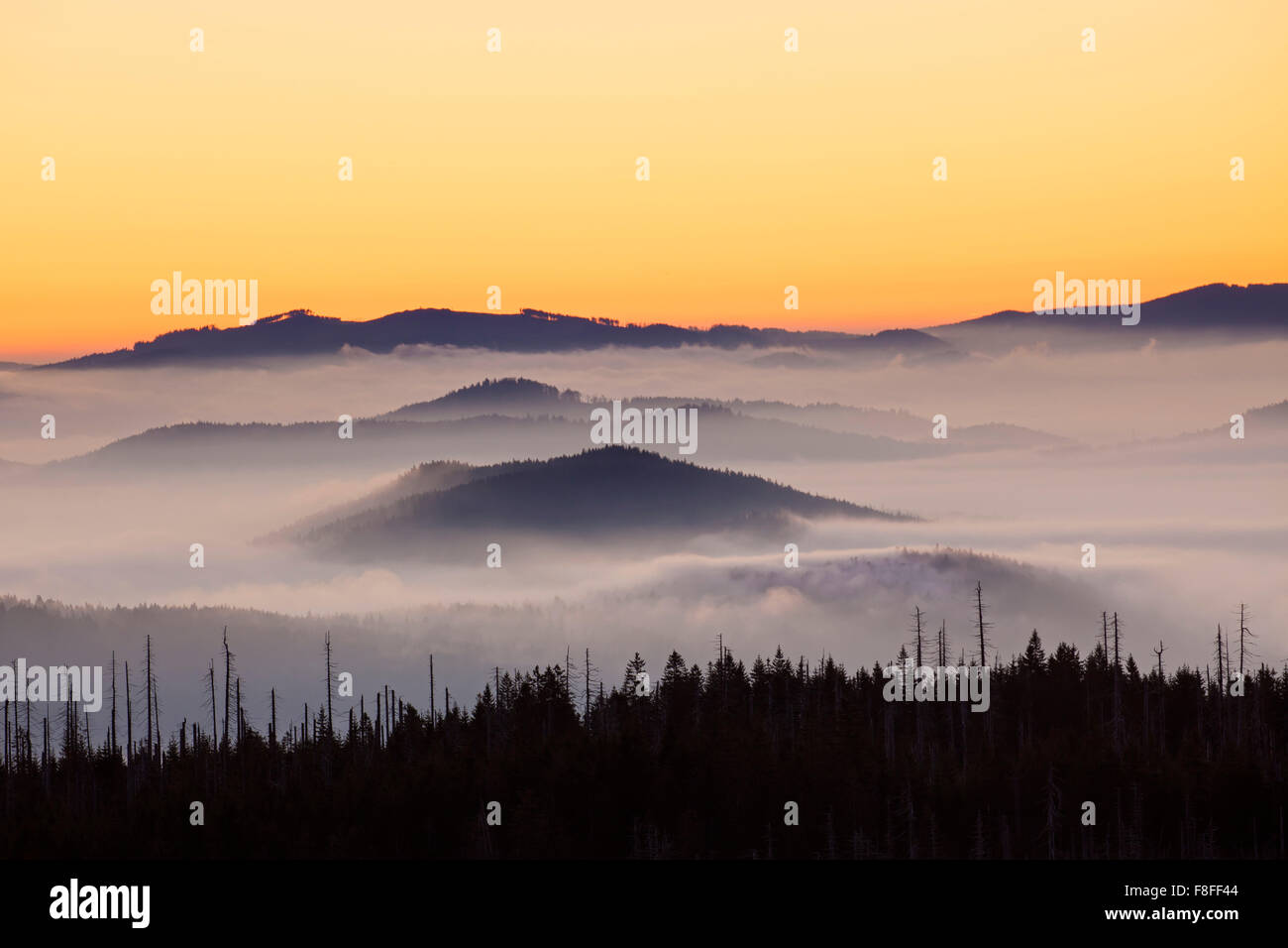 View from Mount Lusen over the Bavarian Forest covered in mist at sunrise, Bavarian Forest National Park, Bavaria, Stock Photo