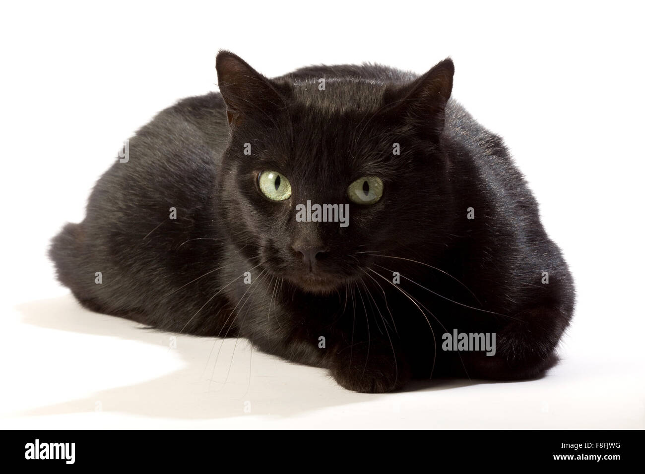 Black cat in different positions. - Stock Image