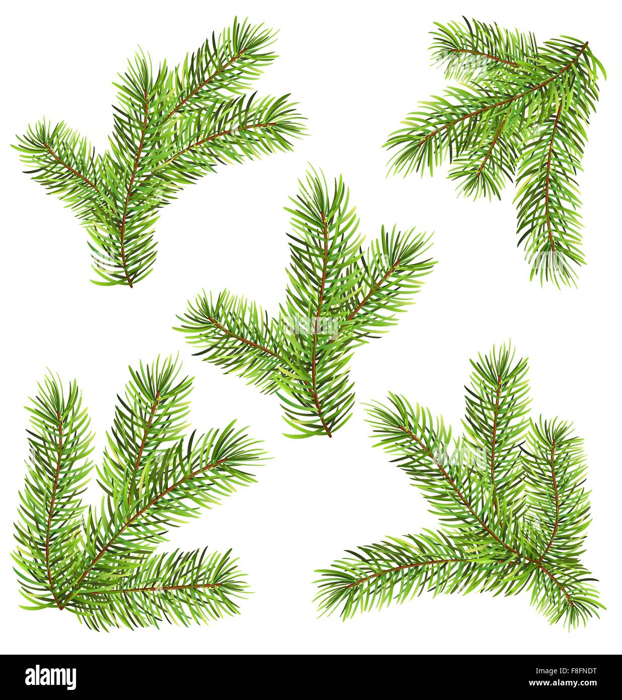 Spruces Branches Isolated on White Background - Stock Vector