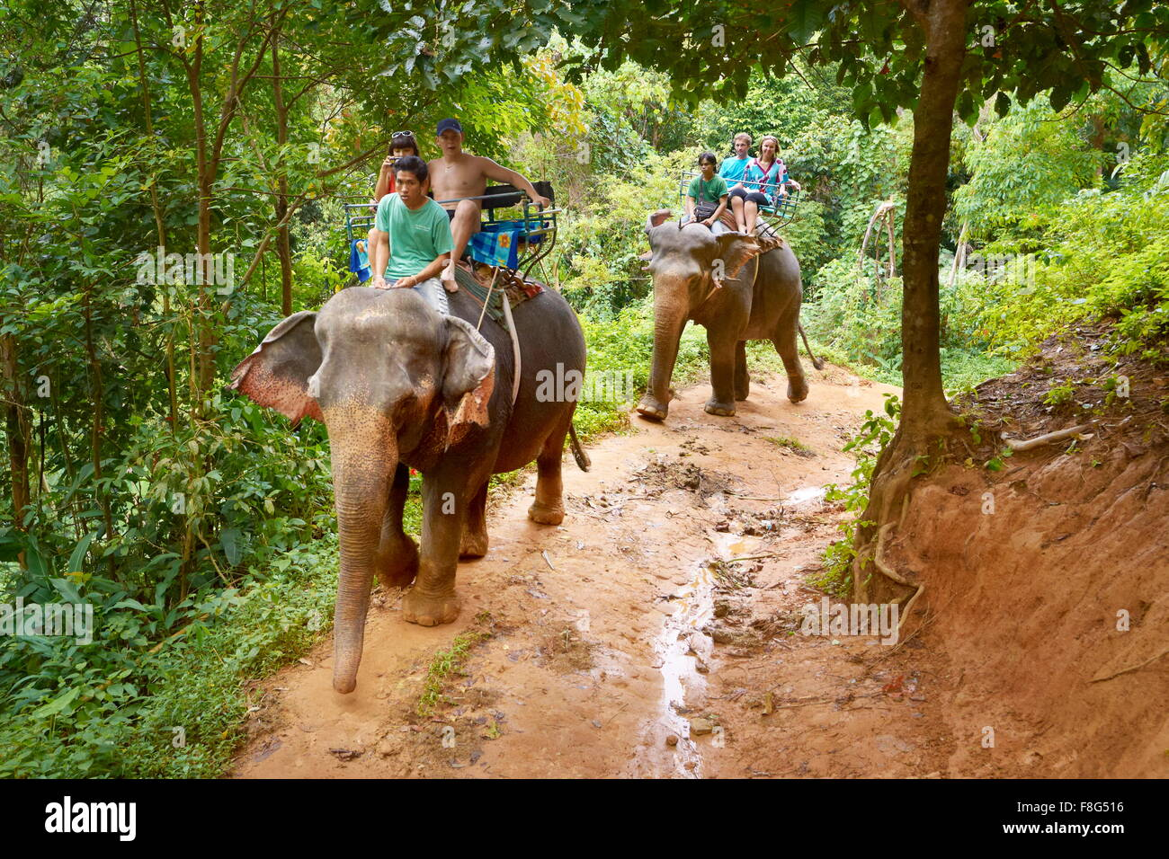 Khao Lak National Park, elephant riding in tropical forest, Thailand - Stock Image