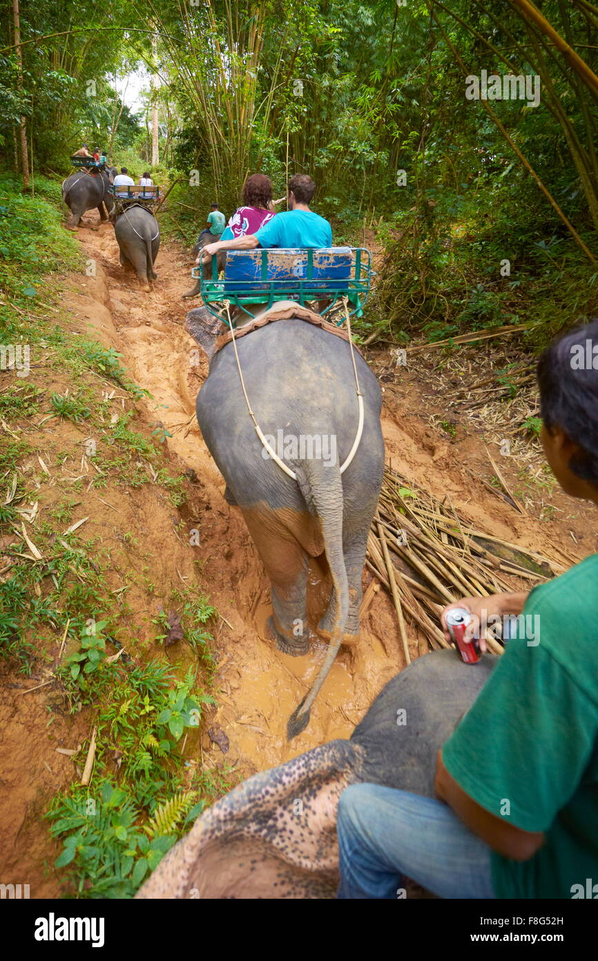 Thailand - Khao Lak National Park, elephant riding in tropical forest - Stock Image