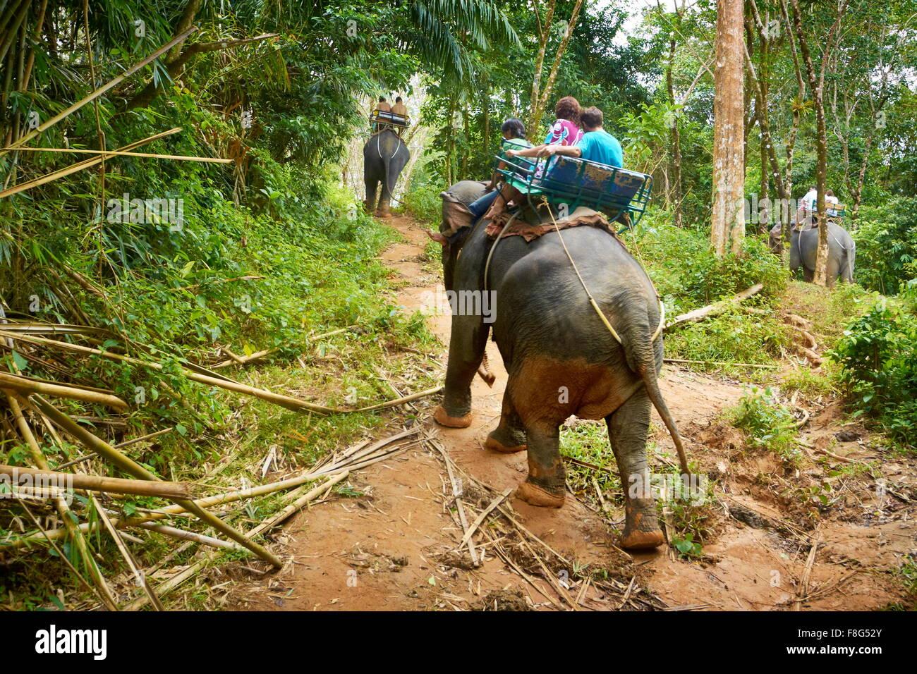 Thailand - Khao Lak National Park, elephant riding in tropical jungle - Stock Image