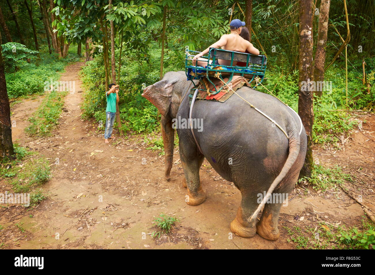 Elephant ride in tropical forest, Khao Lak National Park, Thailand - Stock Image