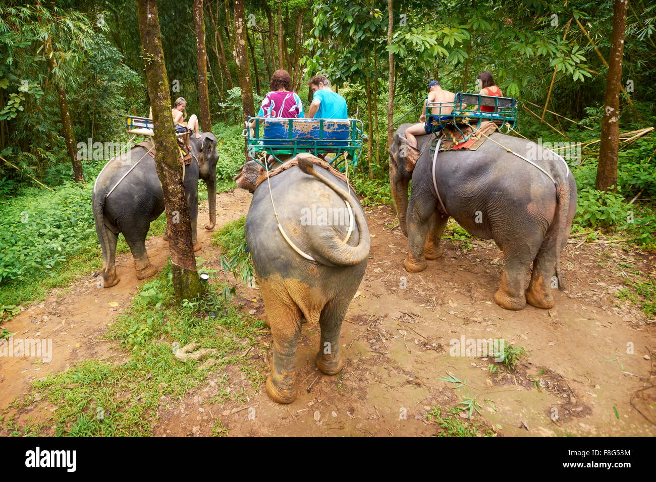 Thailand - elephant riding in tropical forest Stock Photo